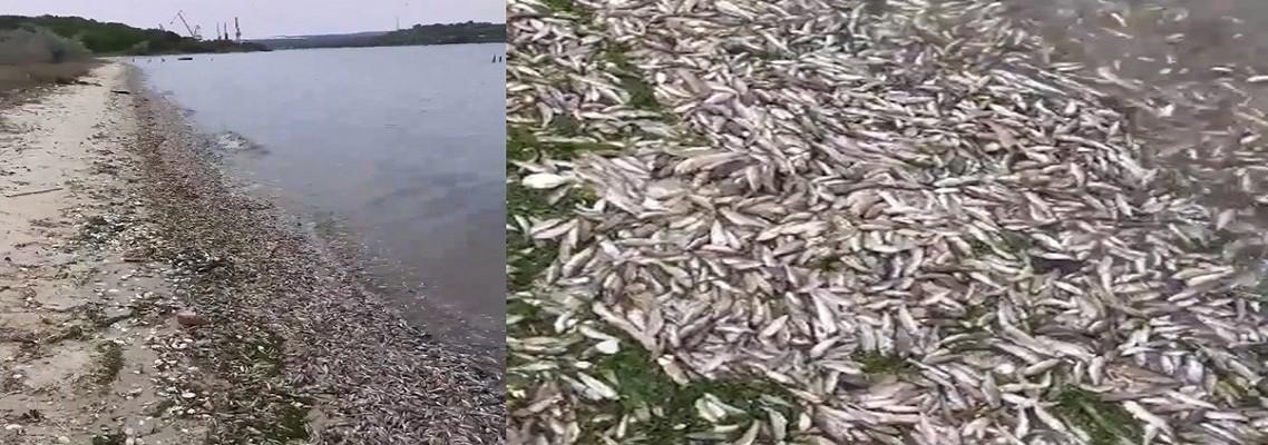 Мъртва риба във Варненското езеро