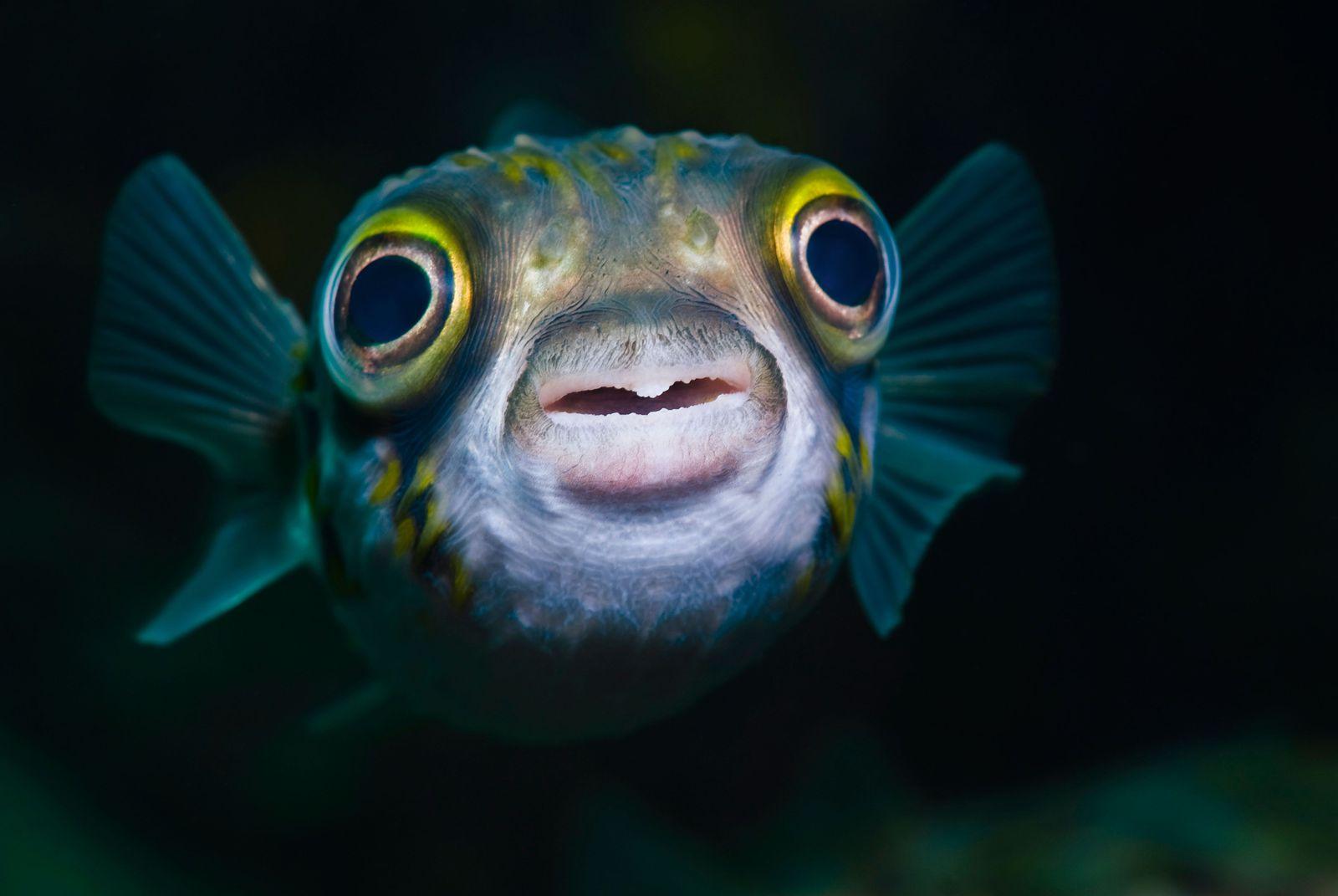 Риба - какво е?